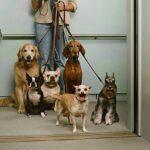 Posso salire con il cane in ascensore?Cosa dice la legge